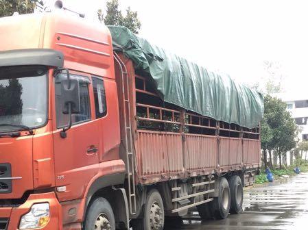 东风天龙 载货车  315匹 2014年10月 8x4